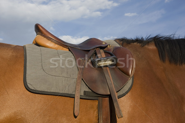 English style saddle on a bay horse Stock photo © PixelsAway