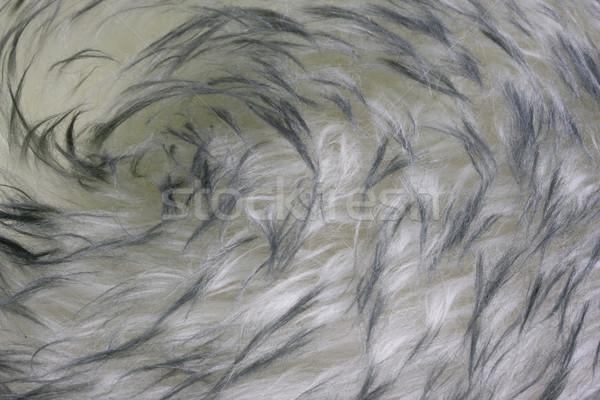 lambskin - fur background with a vortex pattern Stock photo © PixelsAway