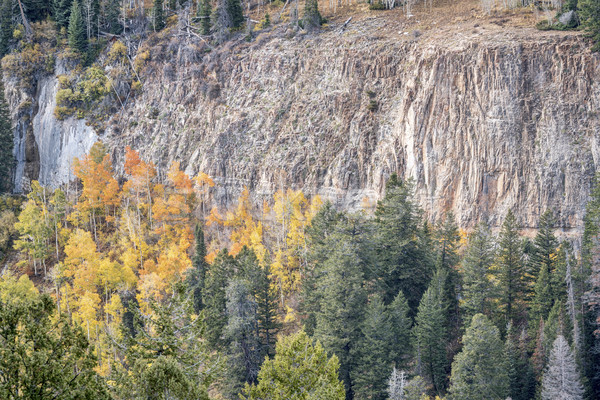 aspen, spruce  and sandstone cliff Stock photo © PixelsAway
