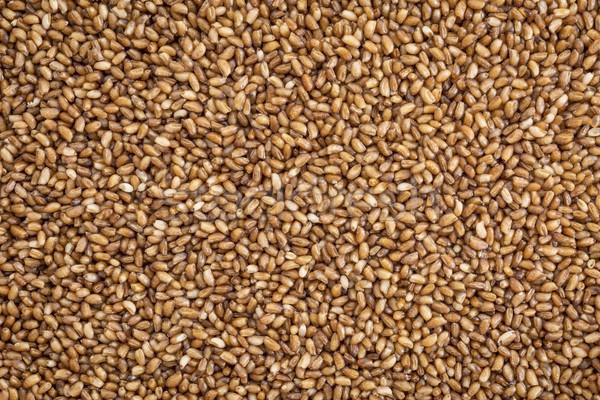 зерна важный продовольствие Эфиопия Эритрея Сток-фото © PixelsAway