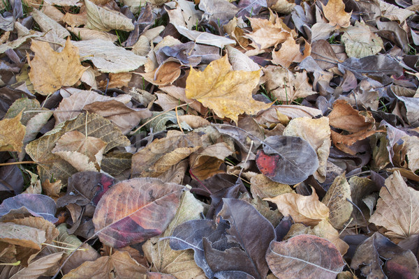 fall leaves texture background Stock photo © PixelsAway