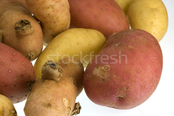fingerling potato of three different varieties Stock photo © PixelsAway