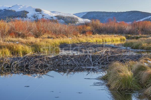 Stock photo: beaver dam on North Platte River