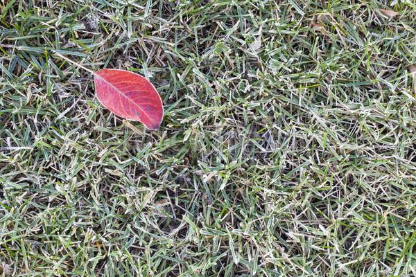 Prato erba coperto gelo texture rosso Foto d'archivio © PixelsAway