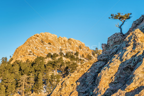 Horsetooth Rock and pine tree Stock photo © PixelsAway