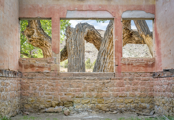 Old cottonwood tree through windows Stock photo © PixelsAway