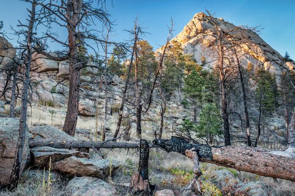 Lasu wildfire górskich sosny zniszczony fort Zdjęcia stock © PixelsAway