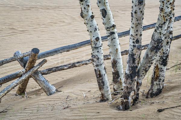 aspen tree and fence Stock photo © PixelsAway