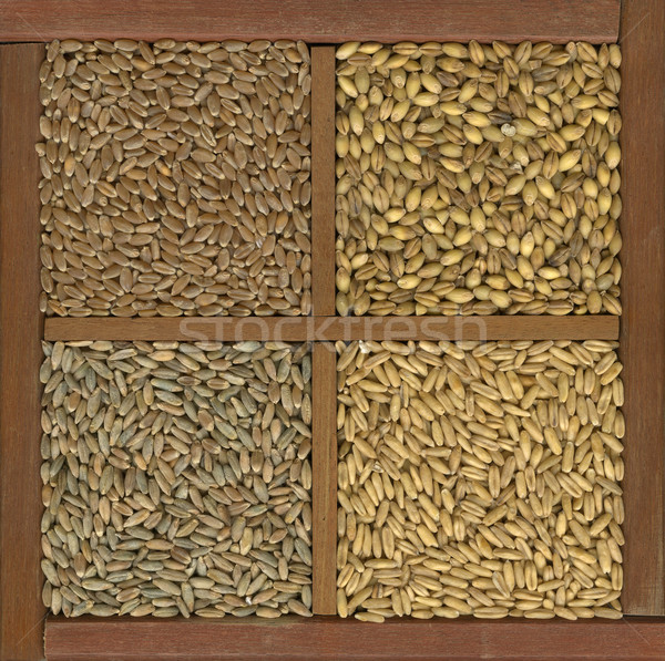 wheat, barley, oat and rye grain Stock photo © PixelsAway
