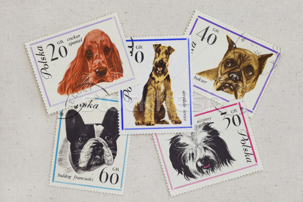 dogs on vintage post stamps from Poland Stock photo © PixelsAway