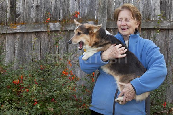 old woman with corgi puppy Stock photo © PixelsAway