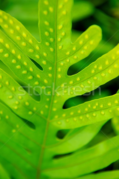 Foglia vibrante verde impianto Hawaii Foto d'archivio © pixelsnap