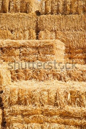 Vízszintes boglya széna Stock fotó © pixelsnap