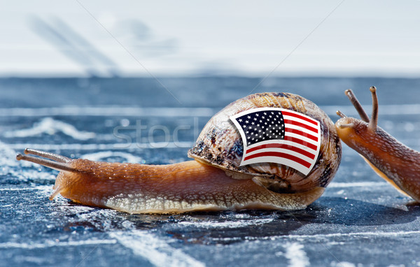 snail with the colors of Usa flag encouraged by another country Stock photo © pixinoo