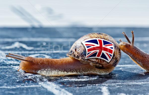 Csiga színek Anglia zászló másik vidék Stock fotó © pixinoo