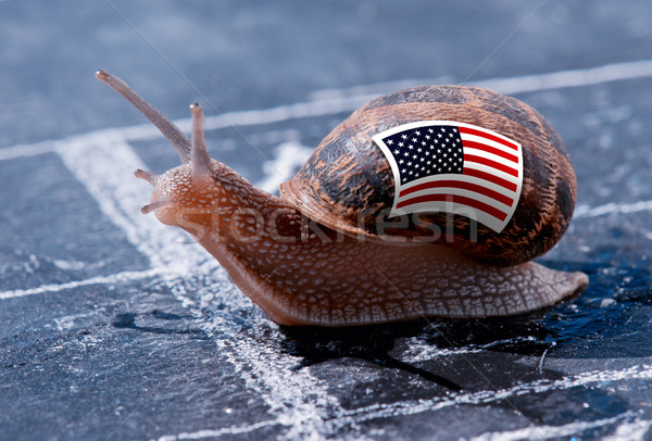 finish line winning of a snail with the colors of Usa flag Stock photo © pixinoo