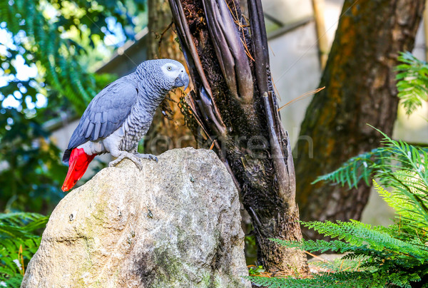 Papagaio topo rocha imagem ao ar livre floresta Foto stock © pixinoo