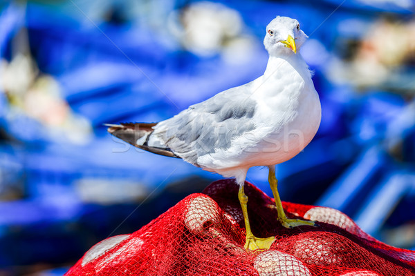 Stock photo: Seagull perched on a fishing net
