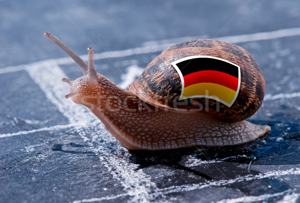 finish line winning of a snail with the colors of Germany flag Stock photo © pixinoo