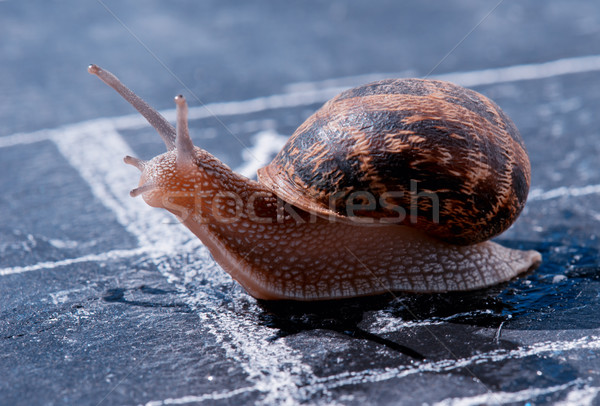 snail crosses the finish line as winner Stock photo © pixinoo