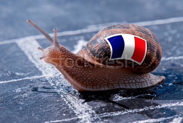 finish line winning of a snail with the colors of France flag Stock photo © pixinoo