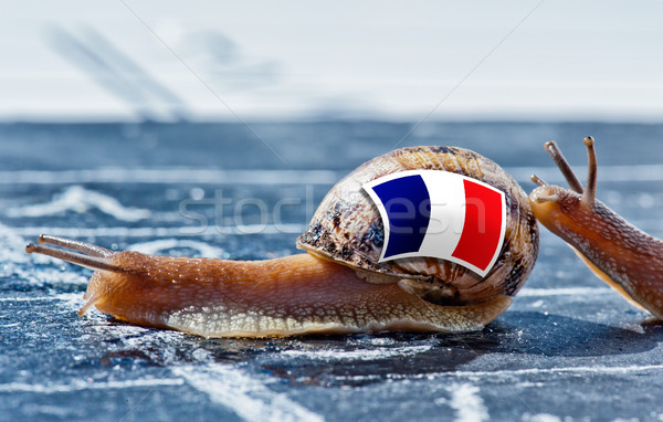 snail with the colors of France flag encouraged by another country Stock photo © pixinoo