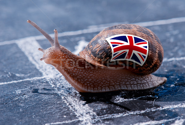 finish line winning of a snail with the colors of England flag Stock photo © pixinoo