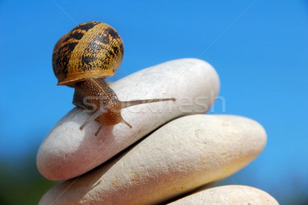 Escargot cailloux ciel famille herbe Photo stock © pixinoo
