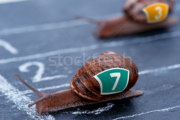 The winner snail crosses the finish line Stock photo © pixinoo