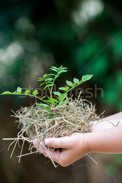 Kezek tart friss kicsi növény közelkép Stock fotó © pixinoo
