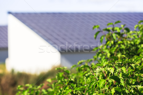 vegetable with Photovoltaic Solar Panels on background Stock photo © pixinoo