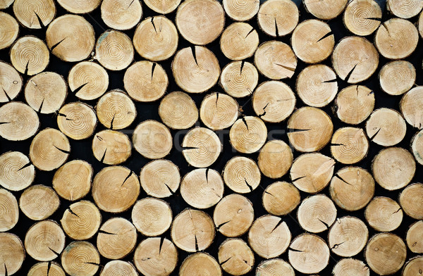 Stacked tree slices Stock photo © pixpack