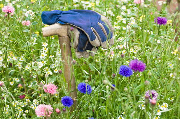 Gardeners gloves in a wild flower meadow Stock photo © pixpack