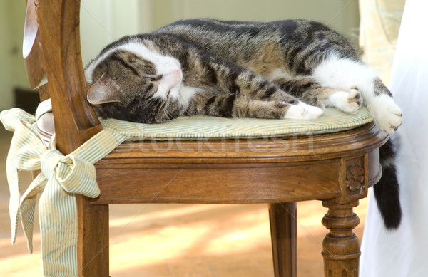 Sleeping cat on a chair Stock photo © pixpack