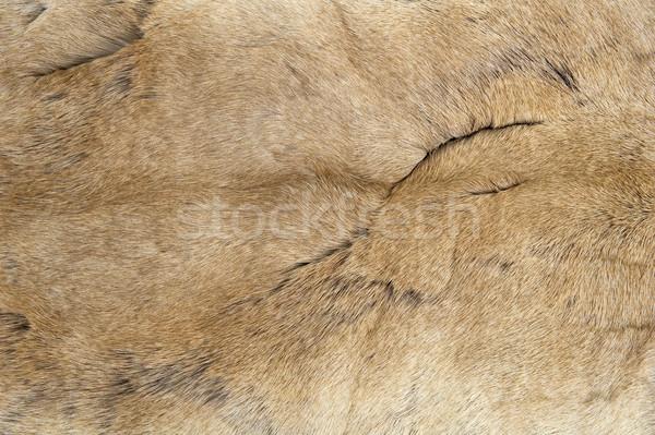 Fur texture Stock photo © pixpack
