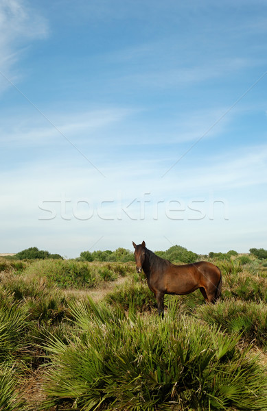 Stock photo: Horse in the prairie