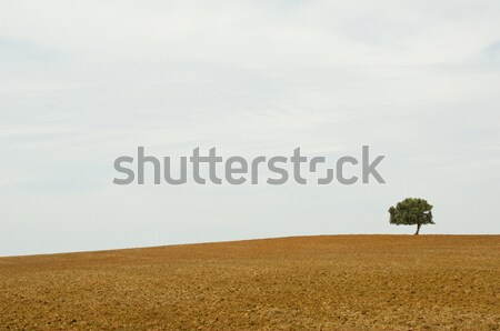 Lonely tree in the wasteland Stock photo © pixpack