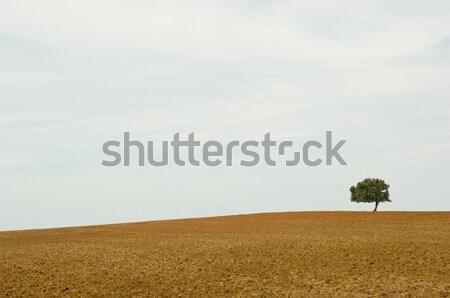 Magányos fa ugar tájkép sivatag föld Stock fotó © pixpack