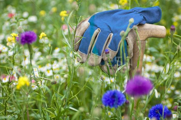 Rękawice dziki kwiat łące kwiaty trawy pracy Zdjęcia stock © pixpack