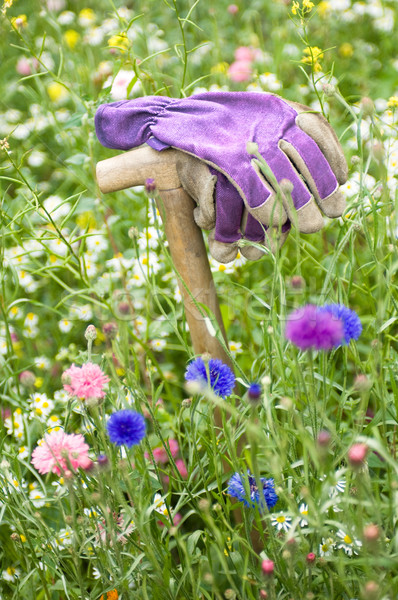 Stock photo: Gardeners gloves in a wild flower meadow