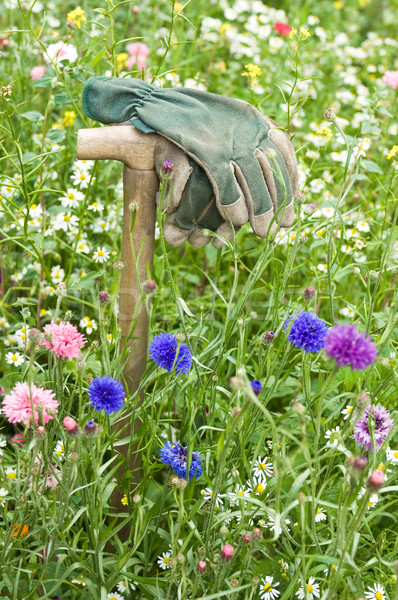 Rękawice dziki kwiat łące kwiaty pracy charakter Zdjęcia stock © pixpack