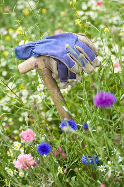Stok fotoğraf: Eldiven · kır · çiçeği · çayır · çiçekler · çalışmak · doğa
