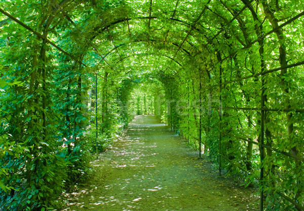 Green archway in a park Stock photo © pixpack