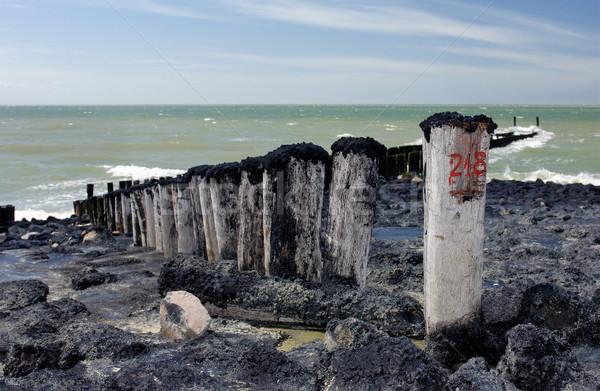 Costa settentrionale mare Paesi Bassi acqua legno Foto d'archivio © pixpack