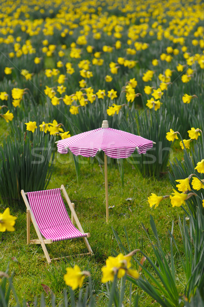 Miniature sunchair and parasol in a daffodil meadow Stock photo © pixpack