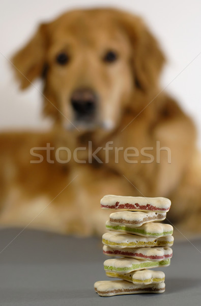Dog watching a pile of dog cookies Stock photo © pixpack