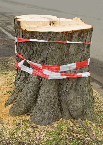 Stump of a felled tree Stock photo © pixpack