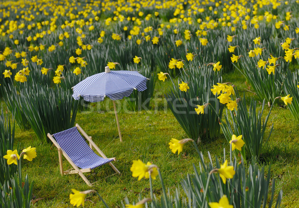 Miniature sunchair and parasol on a daffodil meadow Stock photo © pixpack