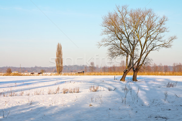 Landscape covered with snow Stock photo © PiXXart