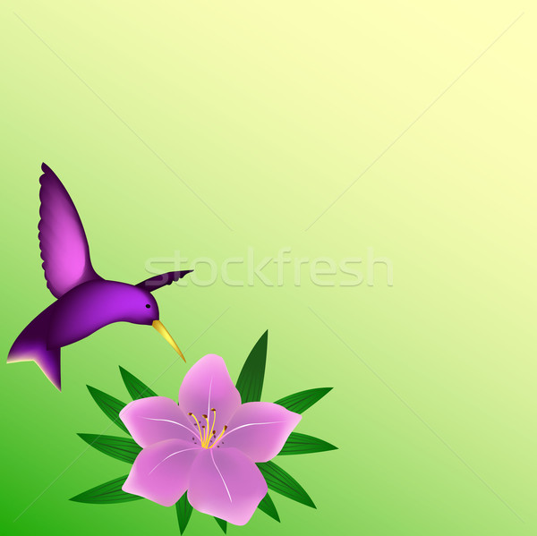 Hummingbird background Stock photo © PiXXart